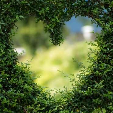 Jardin mitoyen : comment vous cacher des regards indiscrets !